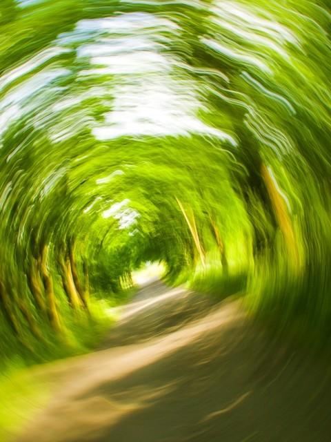 trees-358418_1280