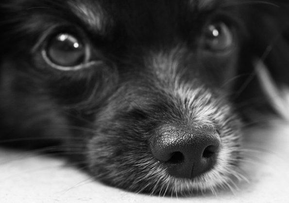 dog-187817_640(1)